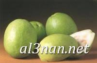 صور جوافة رمزيات وخلفيات جوافة وعصير جوافة 00159 صور جوافة رمزيات وخلفيات جوافة وعصير جوافة