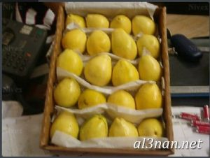 صور جوافة رمزيات وخلفيات جوافة وعصير جوافة 00172 300x226 صور جوافة رمزيات وخلفيات جوافة وعصير جوافة