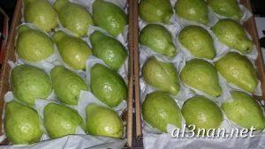 صور جوافة رمزيات وخلفيات جوافة وعصير جوافة 00176 300x169 صور جوافة رمزيات وخلفيات جوافة وعصير جوافة