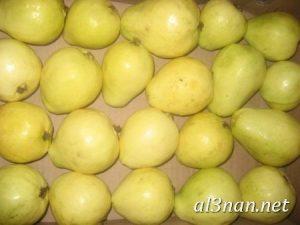 صور جوافة رمزيات وخلفيات جوافة وعصير جوافة 00185 300x225 صور جوافة رمزيات وخلفيات جوافة وعصير جوافة
