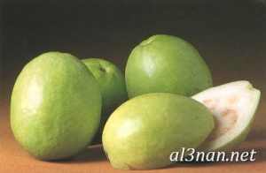 صور جوافة رمزيات وخلفيات جوافة وعصير جوافة 00188 300x196 صور جوافة رمزيات وخلفيات جوافة وعصير جوافة