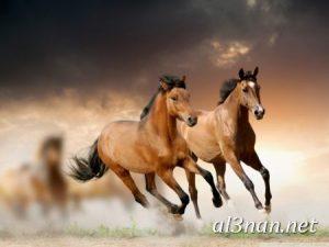 صور-حصان-رمزيات-و-خلفيات-خيل-عربي-اصيل-2019_00196-1-300x225 صور حصان رمزيات و خلفيات خيل عربي اصيل 2019