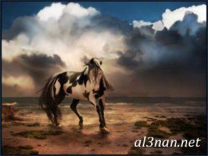 صور-حصان-رمزيات-و-خلفيات-خيل-عربي-اصيل-2019_00202-1-300x225 صور حصان رمزيات و خلفيات خيل عربي اصيل 2019