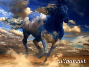 صور-حصان-رمزيات-و-خلفيات-خيل-عربي-اصيل-2019_00203-1-300x225 صور حصان رمزيات و خلفيات خيل عربي اصيل 2019