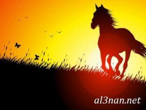 صور-حصان-رمزيات-و-خلفيات-خيل-عربي-اصيل-2019_00206-1-300x225 صور حصان رمزيات و خلفيات خيل عربي اصيل 2019