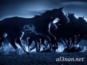 صور-حصان-رمزيات-و-خلفيات-خيل-عربي-اصيل-2019_00220-1-300x225 صور حصان رمزيات و خلفيات خيل عربي اصيل 2019