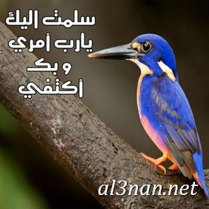صور-رمزيات-اسلامية-للفيس-بوك-والواتس-اب-رمزيات-دينية_00248 صور رمزيات اسلامية للفيس بوك والواتس اب رمزيات دينية
