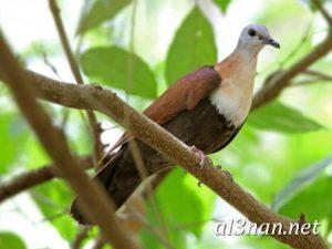 صور طيور HD خلفيات و رمزيات طيور منوعة جميلة 00256 300x225 صور طيور HD خلفيات و رمزيات طيور منوعة جميلة