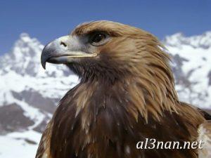 صور طيور HD خلفيات و رمزيات طيور منوعة جميلة 00257 300x225 صور طيور HD خلفيات و رمزيات طيور منوعة جميلة