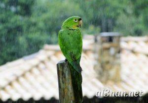 صور طيور HD خلفيات و رمزيات طيور منوعة جميلة 00258 300x208 صور طيور HD خلفيات و رمزيات طيور منوعة جميلة
