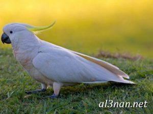 صور طيور HD خلفيات و رمزيات طيور منوعة جميلة 00259 300x225 صور طيور HD خلفيات و رمزيات طيور منوعة جميلة