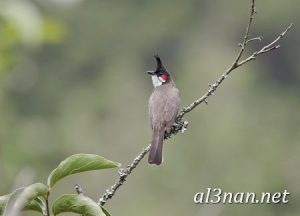 صور طيور HD خلفيات و رمزيات طيور منوعة جميلة 00260 300x216 صور طيور HD خلفيات و رمزيات طيور منوعة جميلة