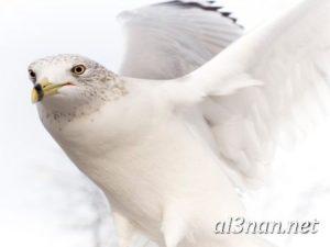 صور طيور HD خلفيات و رمزيات طيور منوعة جميلة 00261 300x225 صور طيور HD خلفيات و رمزيات طيور منوعة جميلة