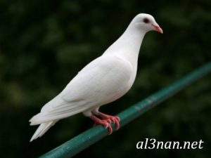 صور طيور HD خلفيات و رمزيات طيور منوعة جميلة 00262 300x225 صور طيور HD خلفيات و رمزيات طيور منوعة جميلة