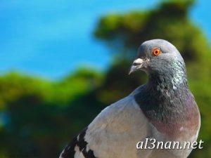 صور طيور HD خلفيات و رمزيات طيور منوعة جميلة 00263 300x225 صور طيور HD خلفيات و رمزيات طيور منوعة جميلة
