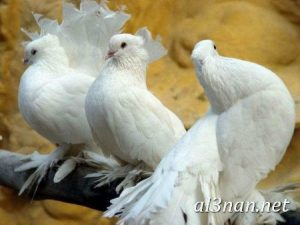 صور طيور HD خلفيات و رمزيات طيور منوعة جميلة 00264 300x225 صور طيور HD خلفيات و رمزيات طيور منوعة جميلة