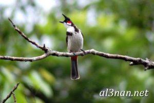 صور-طيور-HD-خلفيات-و-رمزيات-طيور-منوعة-جميلة_00265-300x201 صور طيور HD خلفيات و رمزيات طيور منوعة جميلة