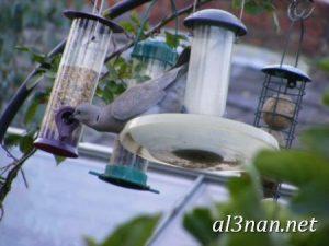 صور طيور HD خلفيات و رمزيات طيور منوعة جميلة 00266 300x225 صور طيور HD خلفيات و رمزيات طيور منوعة جميلة