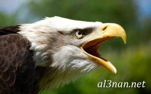 صور طيور HD خلفيات و رمزيات طيور منوعة جميلة 00267 300x187 صور طيور HD خلفيات و رمزيات طيور منوعة جميلة