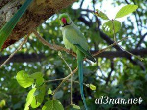 صور طيور HD خلفيات و رمزيات طيور منوعة جميلة 00268 300x225 صور طيور HD خلفيات و رمزيات طيور منوعة جميلة