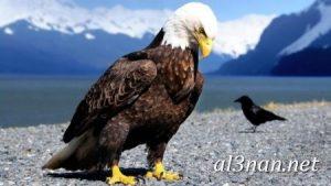 صور-طيور-HD-خلفيات-و-رمزيات-طيور-منوعة-جميلة_00269-300x169 صور طيور HD خلفيات و رمزيات طيور منوعة جميلة