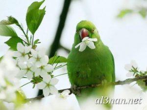 صور طيور HD خلفيات و رمزيات طيور منوعة جميلة 00270 300x225 صور طيور HD خلفيات و رمزيات طيور منوعة جميلة