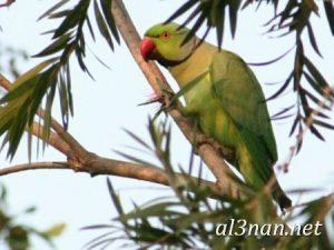 صور-طيور-HD-خلفيات-و-رمزيات-طيور-منوعة-جميلة_00271-300x225 صور طيور HD خلفيات و رمزيات طيور منوعة جميلة