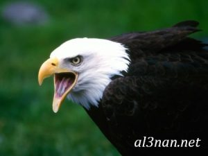 صور طيور HD خلفيات و رمزيات طيور منوعة جميلة 00272 300x225 صور طيور HD خلفيات و رمزيات طيور منوعة جميلة