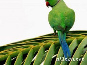 صور-طيور-HD-خلفيات-و-رمزيات-طيور-منوعة-جميلة_00273-300x225 صور طيور HD خلفيات و رمزيات طيور منوعة جميلة