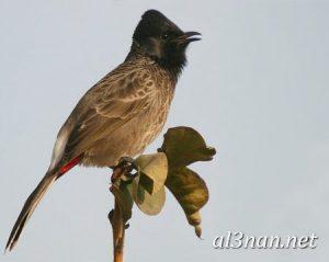صور طيور HD خلفيات و رمزيات طيور منوعة جميلة 00274 300x239 صور طيور HD خلفيات و رمزيات طيور منوعة جميلة