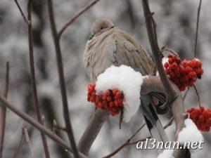 صور طيور HD خلفيات و رمزيات طيور منوعة جميلة 00275 300x225 صور طيور HD خلفيات و رمزيات طيور منوعة جميلة