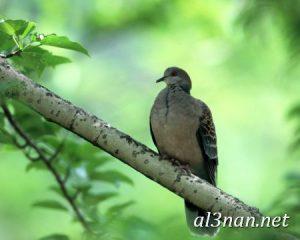 صور-طيور-HD-خلفيات-و-رمزيات-طيور-منوعة-جميلة_00276-300x240 صور طيور HD خلفيات و رمزيات طيور منوعة جميلة
