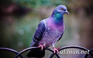 صور طيور HD خلفيات و رمزيات طيور منوعة جميلة 00277 300x187 صور طيور HD خلفيات و رمزيات طيور منوعة جميلة