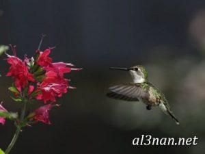 صور طيور HD خلفيات و رمزيات طيور منوعة جميلة 00280 300x225 صور طيور HD خلفيات و رمزيات طيور منوعة جميلة
