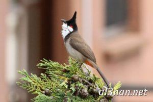 صور-طيور-HD-خلفيات-و-رمزيات-طيور-منوعة-جميلة_00281-300x200 صور طيور HD خلفيات و رمزيات طيور منوعة جميلة