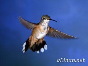 صور-طيور-HD-خلفيات-و-رمزيات-طيور-منوعة-جميلة_00282-300x225 صور طيور HD خلفيات و رمزيات طيور منوعة جميلة