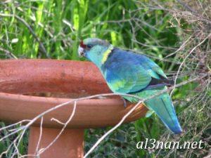 صور طيور HD خلفيات و رمزيات طيور منوعة جميلة 00285 300x225 صور طيور HD خلفيات و رمزيات طيور منوعة جميلة