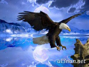 صور طيور HD خلفيات و رمزيات طيور منوعة جميلة 00287 300x225 صور طيور HD خلفيات و رمزيات طيور منوعة جميلة