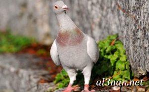 صور طيور HD خلفيات و رمزيات طيور منوعة جميلة 00303 300x187 صور طيور HD خلفيات و رمزيات طيور منوعة جميلة
