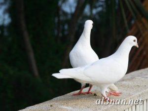 صور طيور HD خلفيات و رمزيات طيور منوعة جميلة 00304 300x225 صور طيور HD خلفيات و رمزيات طيور منوعة جميلة