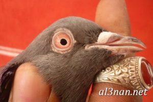 صور طيور HD خلفيات و رمزيات طيور منوعة جميلة 00305 300x200 صور طيور HD خلفيات و رمزيات طيور منوعة جميلة
