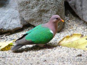 صور طيور HD خلفيات و رمزيات طيور منوعة جميلة 00306 300x225 صور طيور HD خلفيات و رمزيات طيور منوعة جميلة
