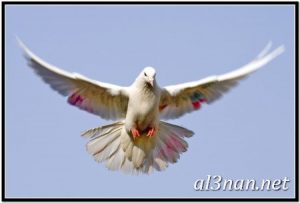صور طيور HD خلفيات و رمزيات طيور منوعة جميلة 00307 300x203 صور طيور HD خلفيات و رمزيات طيور منوعة جميلة