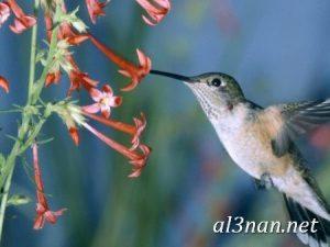 صور طيور HD خلفيات و رمزيات طيور منوعة جميلة 00308 300x225 صور طيور HD خلفيات و رمزيات طيور منوعة جميلة