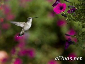 صور طيور HD خلفيات و رمزيات طيور منوعة جميلة 00309 300x225 صور طيور HD خلفيات و رمزيات طيور منوعة جميلة