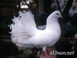 صور-طيور-HD-خلفيات-و-رمزيات-طيور-منوعة-جميلة_00310-300x225 صور طيور HD خلفيات و رمزيات طيور منوعة جميلة