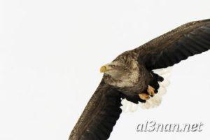 صور-طيور-HD-خلفيات-و-رمزيات-طيور-منوعة-جميلة_00311-300x200 صور طيور HD خلفيات و رمزيات طيور منوعة جميلة