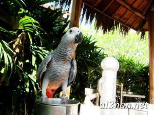 صور طيور HD خلفيات و رمزيات طيور منوعة جميلة 00312 300x225 صور طيور HD خلفيات و رمزيات طيور منوعة جميلة