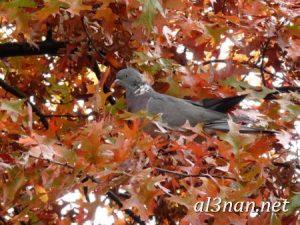 صور-طيور-HD-خلفيات-و-رمزيات-طيور-منوعة-جميلة_00313-300x225 صور طيور HD خلفيات و رمزيات طيور منوعة جميلة