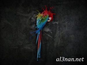 صور طيور HD خلفيات و رمزيات طيور منوعة جميلة 00314 300x225 صور طيور HD خلفيات و رمزيات طيور منوعة جميلة